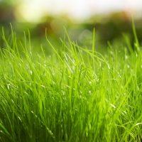 Fertilizing Program